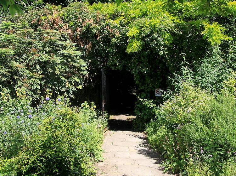 Barnsbury Wood Nature Reserve