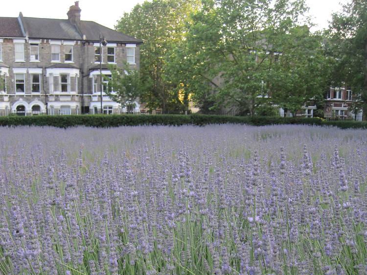 Lavender Garden Vauxhall Park