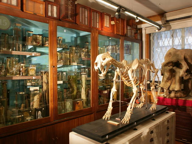 14 weird but wonderful London museums