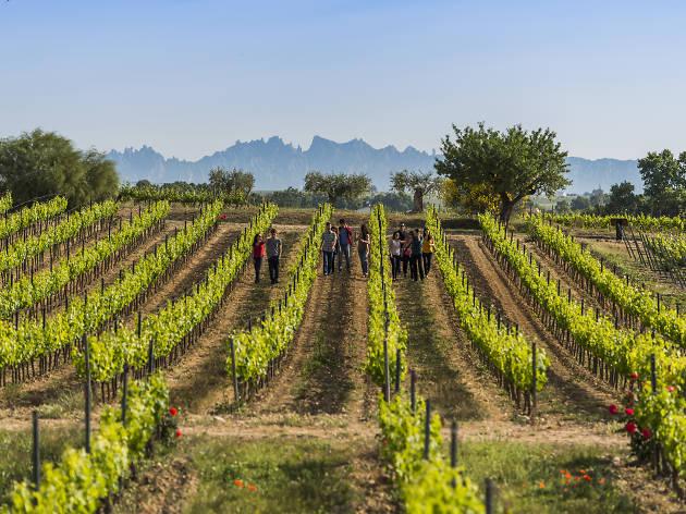 Paseo entre viñedos