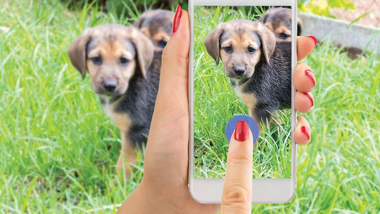 Una app con albergues, rescatistas, hospitales, veterinarias y lugares petfriendly