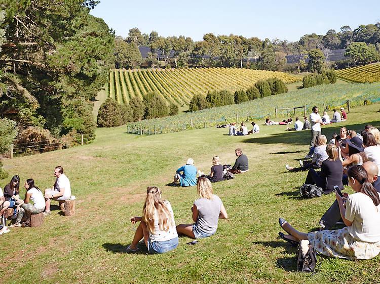 Uncover the delicious secrets on the Wine Food Farmgate Trail