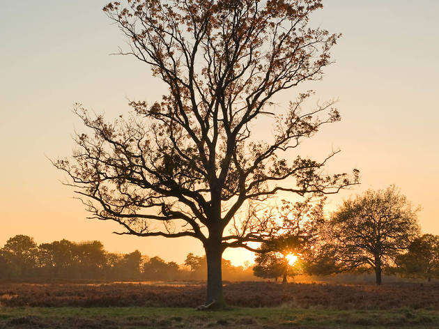 Sunset in Bushy Park