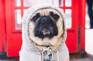 Ten London dogs doing Instagram better than you