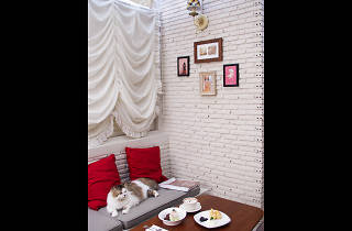 Purr Cat Cafe Club 01