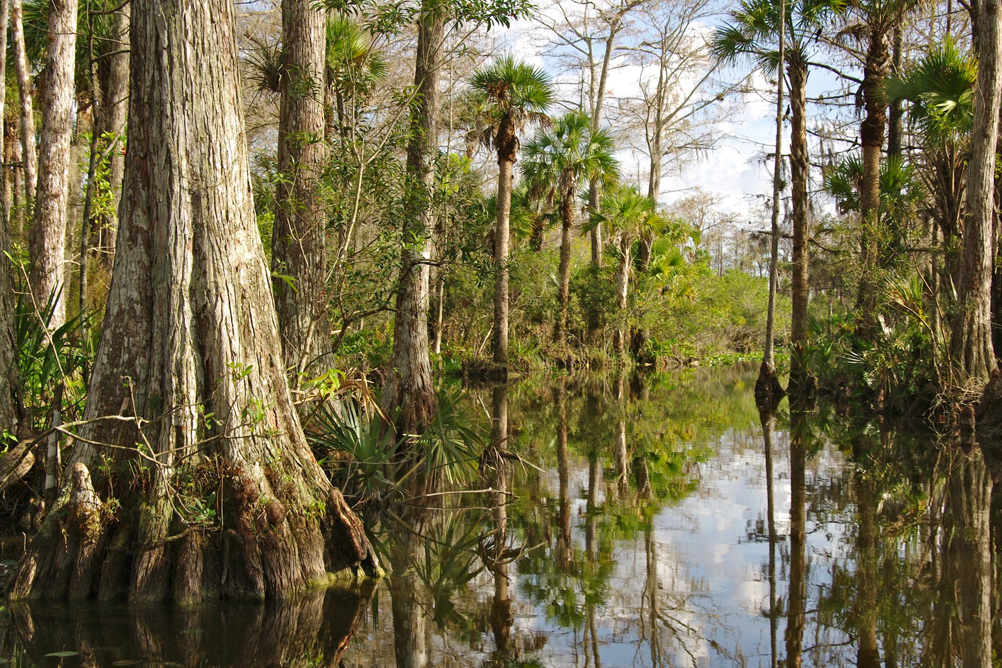 Florida Everglades kayak and hiking tour