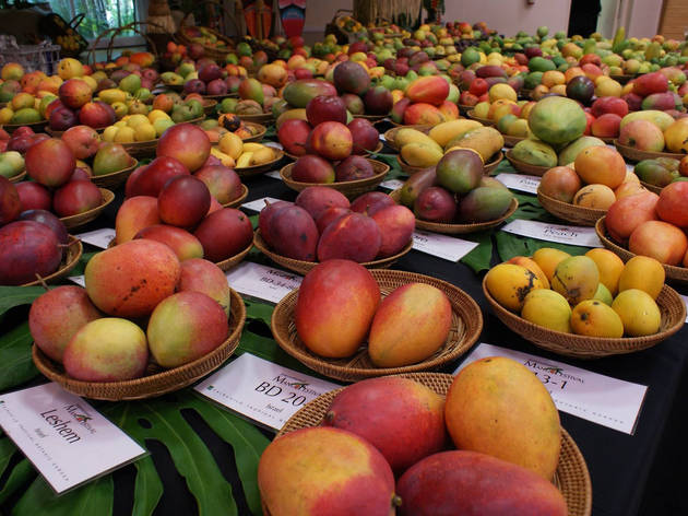 Fairchild mango display in Garden House