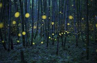 (Kei Nomiyana: 'Enchanted Bamboo Forest', 2016. © Kei Nomiyama, Japan, Shortlist, Open Low Light, 2016 Sony World Photography Awards)