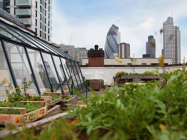 rooftop restaurants in london, culpeper roof garden