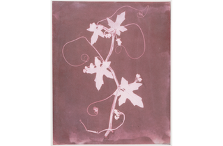 (William Henry Fox Talbot: 'The English Vine'. © National Media Museum)