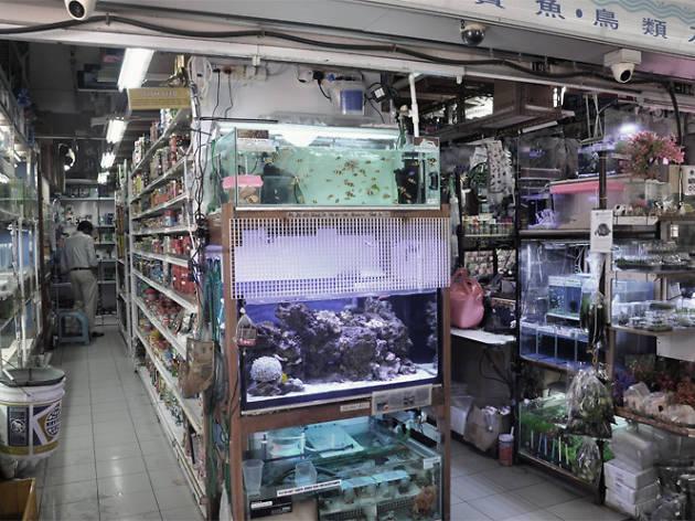 Polyart Aquarium