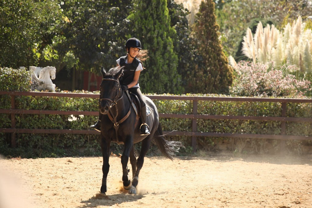 International K9&Horse Club