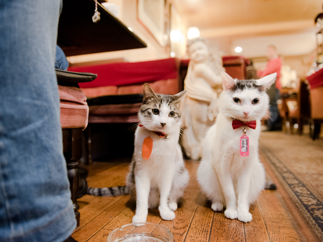 Public cat #1 | Time Out Tokyo