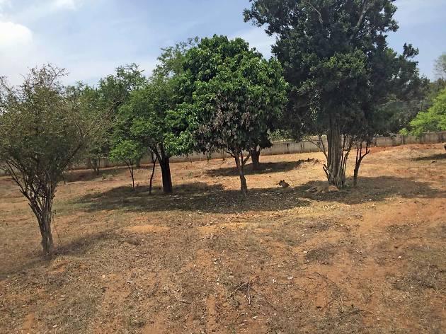 Ridiyagama Hambantota  wildlife park