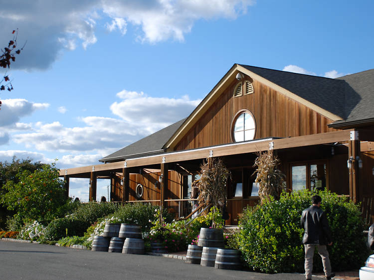 The best North Fork wineries