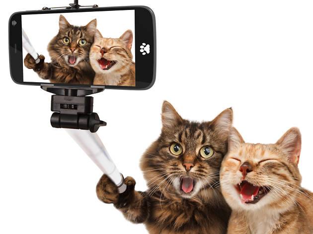 Selfie gats