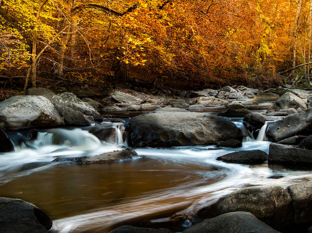 Get in touch with nature at Rock Creek Park