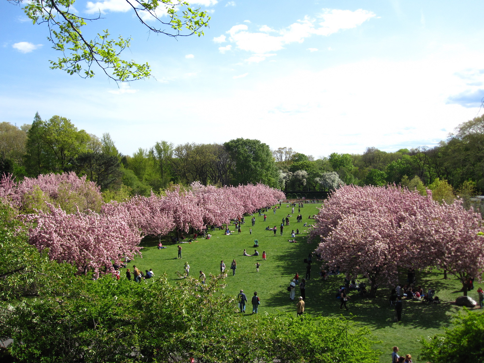 Everything you need to know about the cherry blossom festival this weekend (2016)
