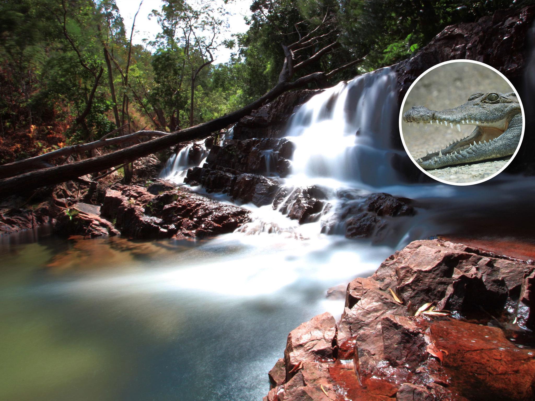 Australia on a plate - Crocodile