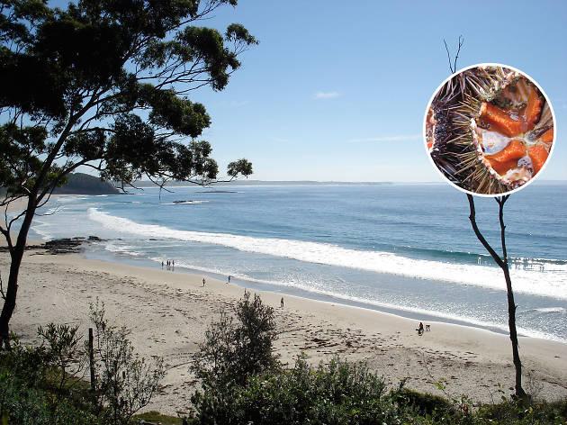 Australia on a plate - Sea urchin