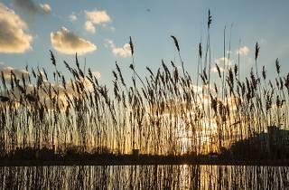 Secretly brilliant bits of London: Woodberry Wetlands