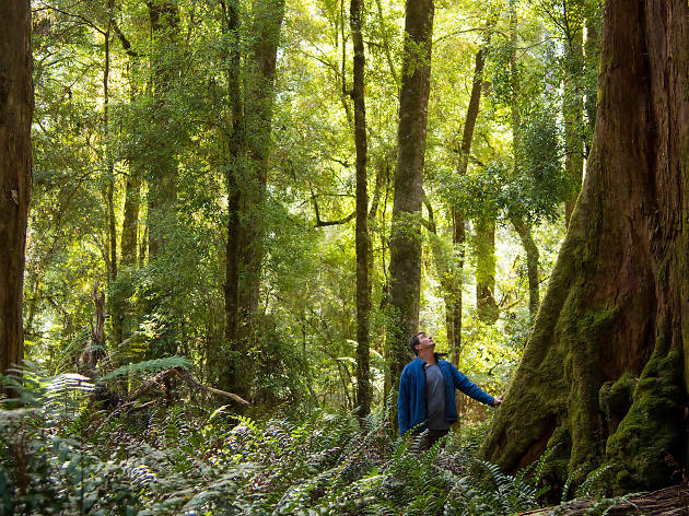 Explore the Tarkine