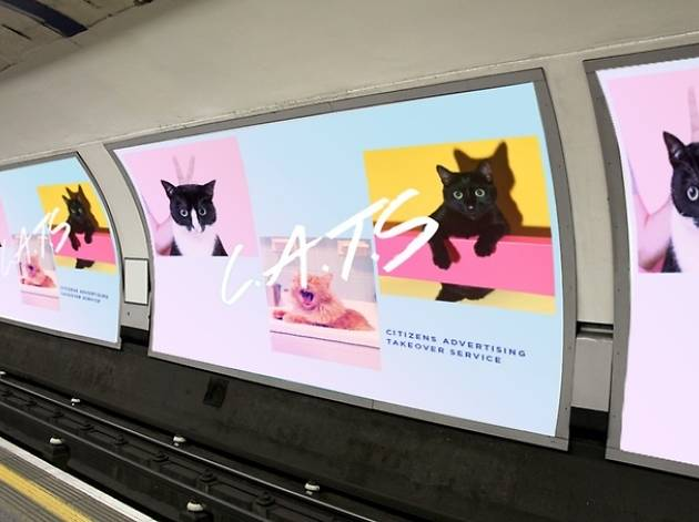 A company is crowdfunding to replace all the adverts in a tube station with photos of cats