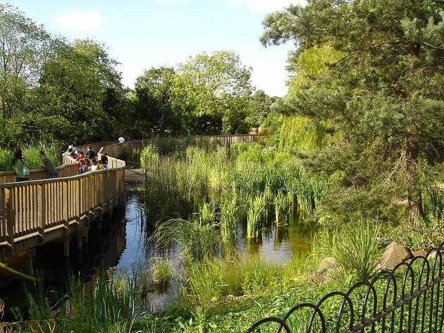 Dulwich Park - Crocs