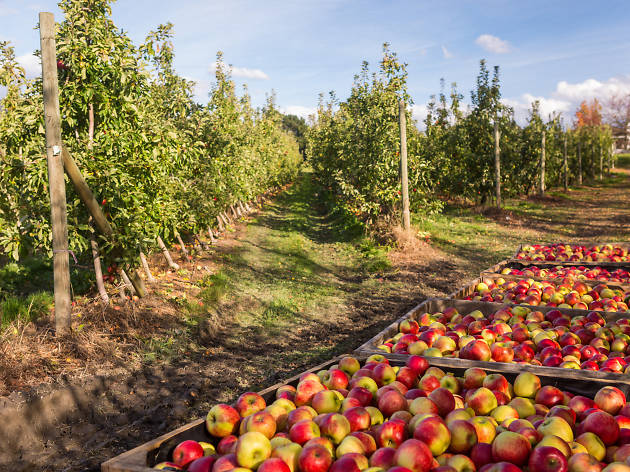 Willie Smiths Organic Apple Cider orchards