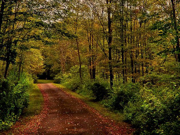 Lackawanna State Park