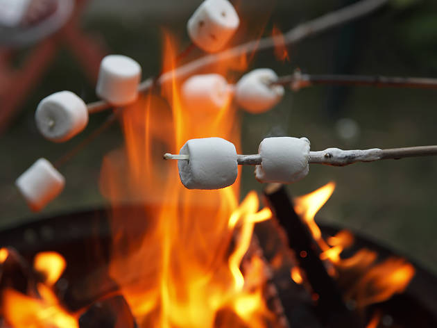 camp, camping, fire, bonfire, smores, marshmallows