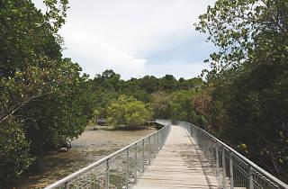 Chek Jawa wetlands, Pulau Ubin