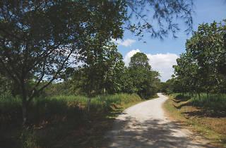 Ketam Mountain Bike Park, Pulau Ubin