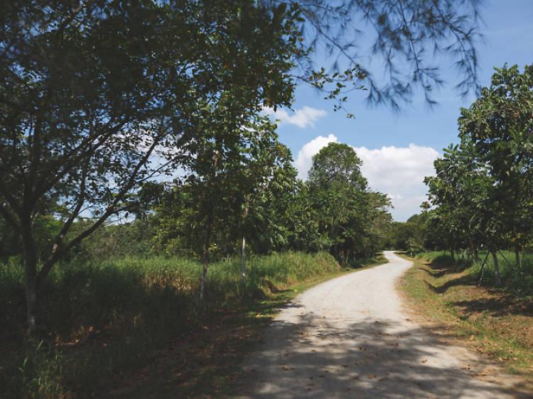 Ketam MTB Trail