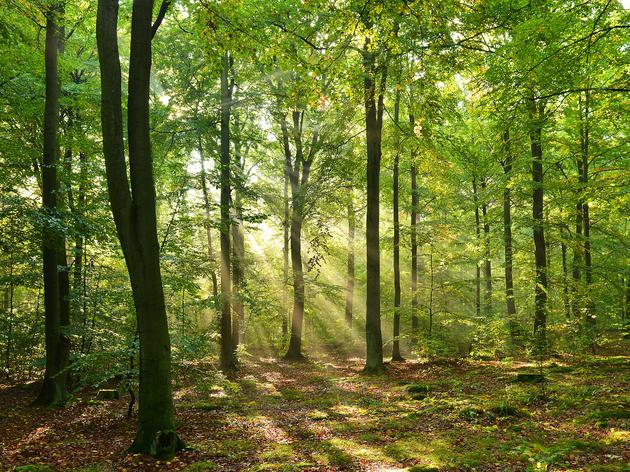 Visite autour de « La Forêt »