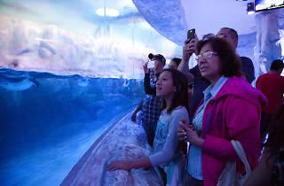 Acuario Inbursa en el Día Internacional de los Museos
