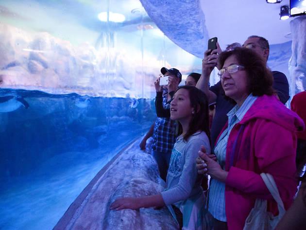 Lugares para niños en el Día Internacional de los Museos