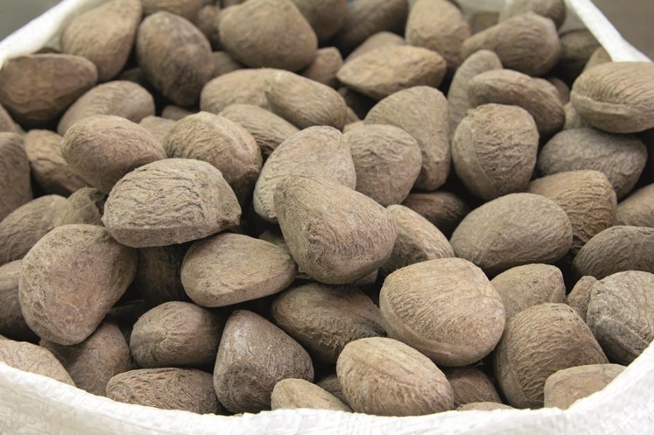 Buah Keluak Nuts
