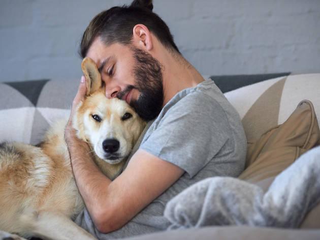 gossos