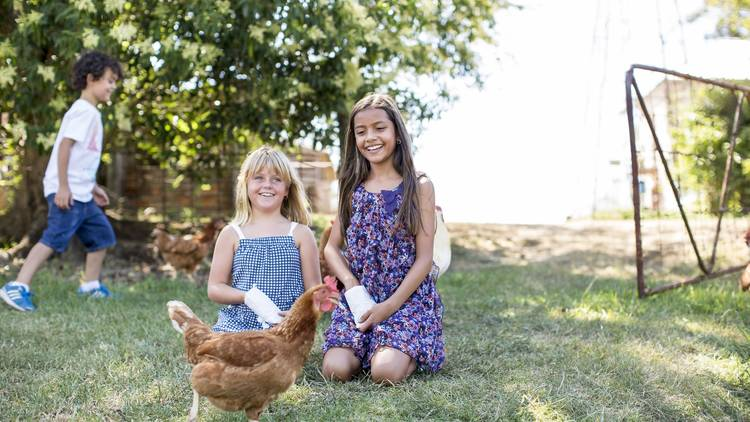 Kids playing with the chickens at Rouse Hill House & Farm