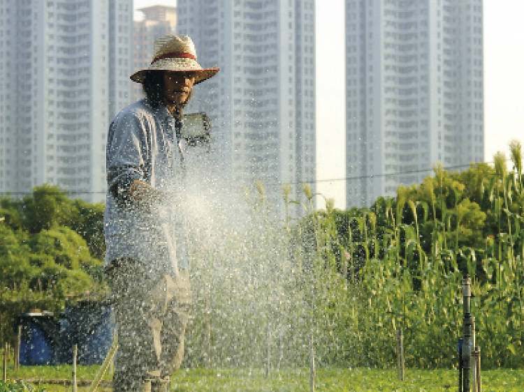 The best farms in Hong Kong for kids and families