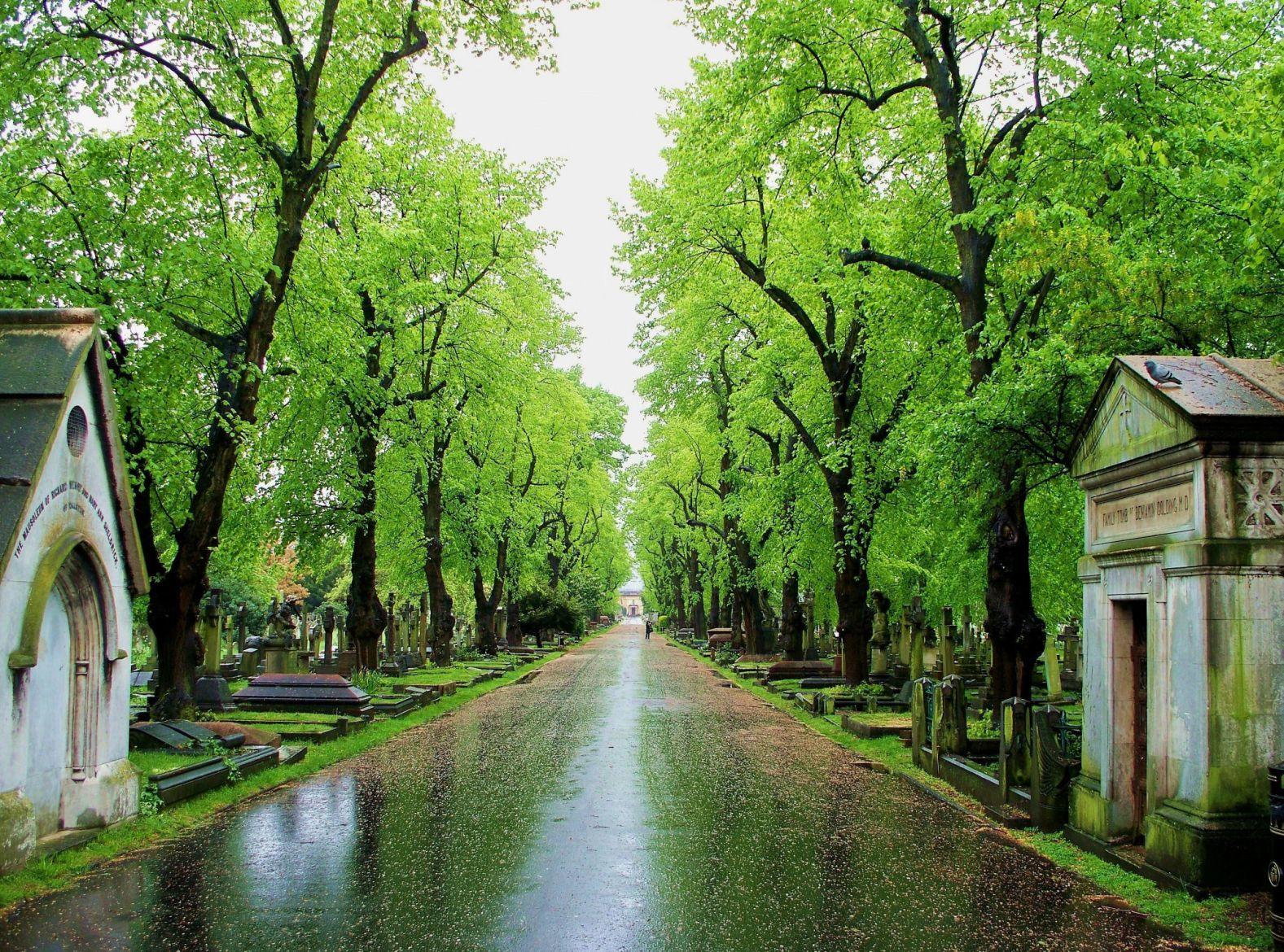 Bioblitz in Brompton Cemetery