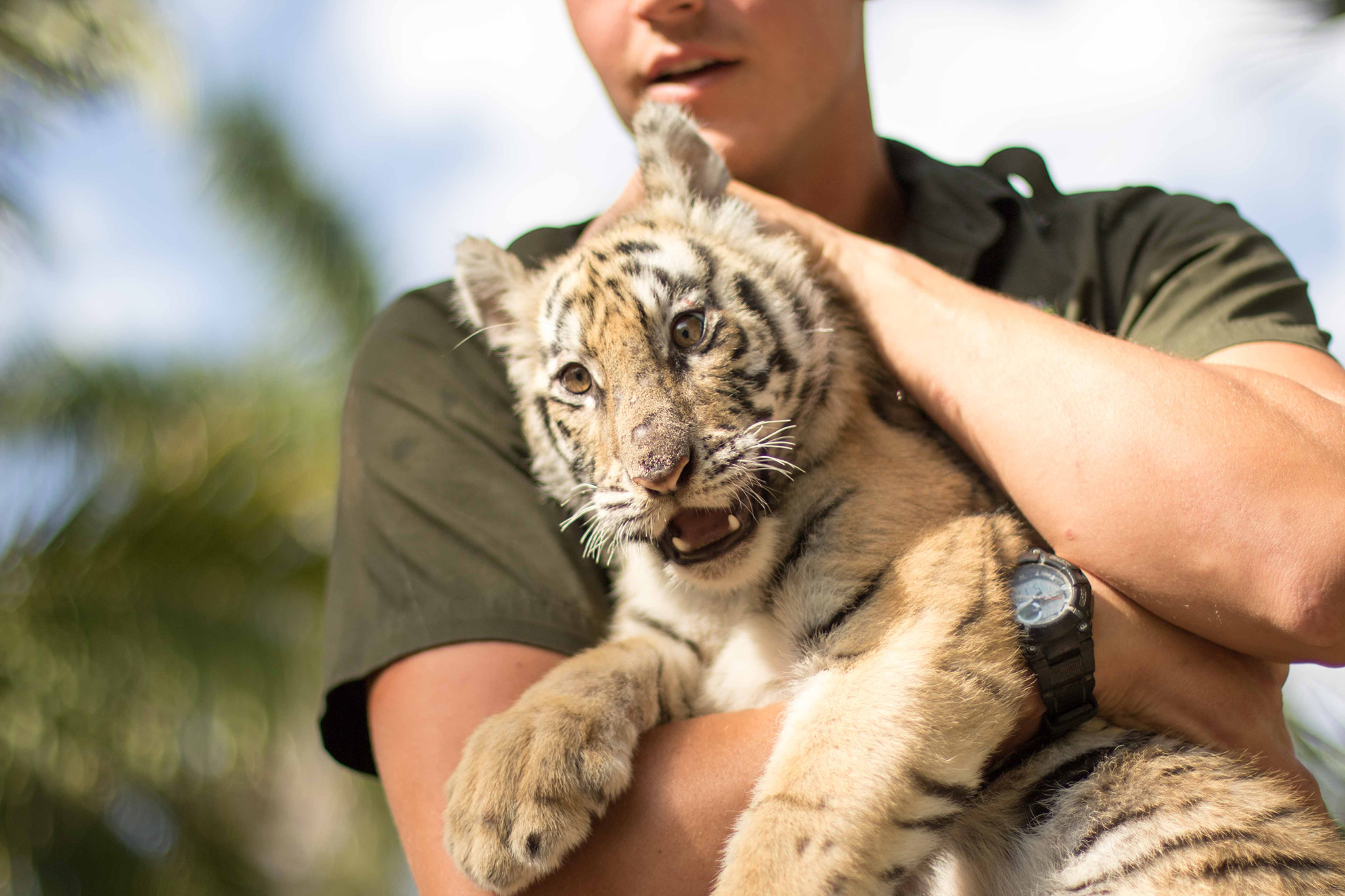 Have an animal encounter at Zoological Wildlife Foundation