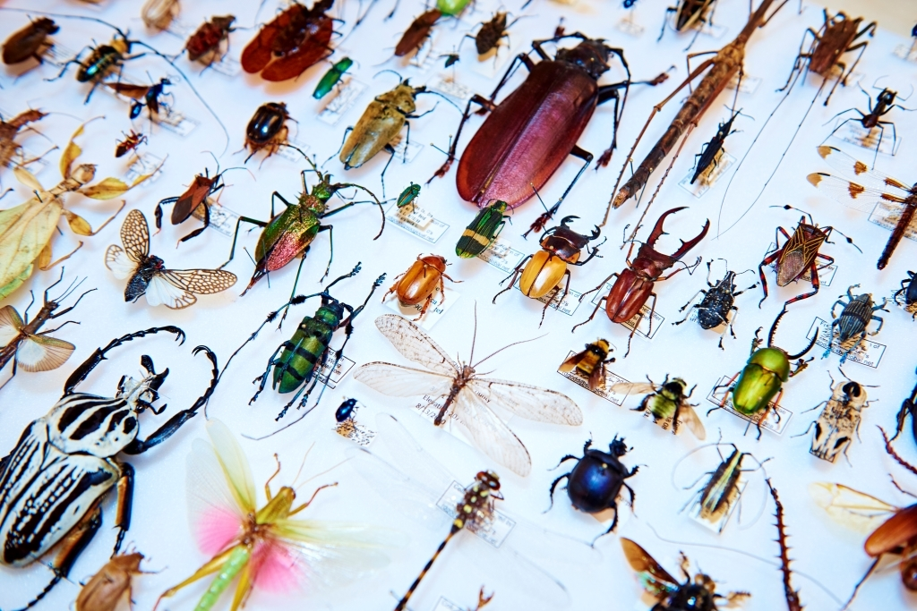Bug Fair Natural History Museum Tickets