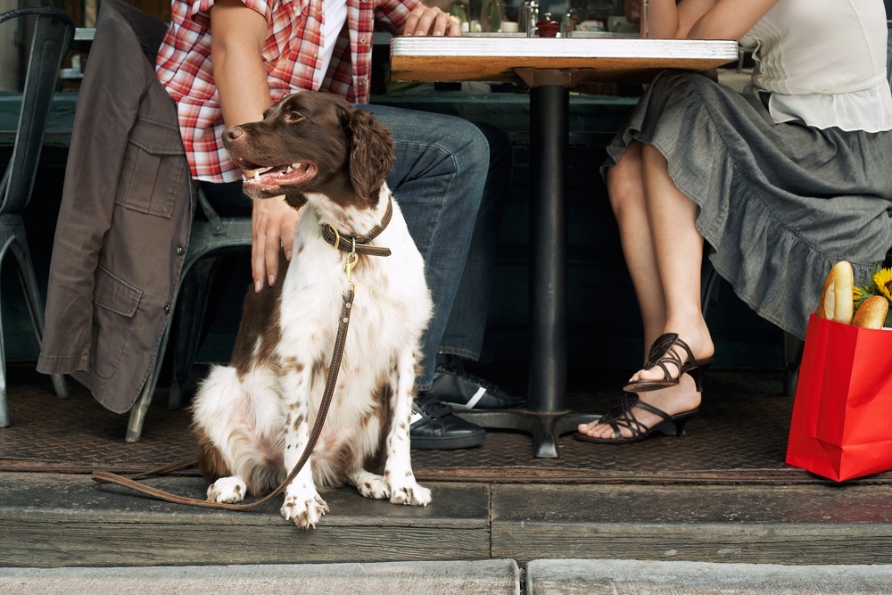 The best dog-friendly restaurants in NYC