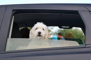 Taxi para mascotas