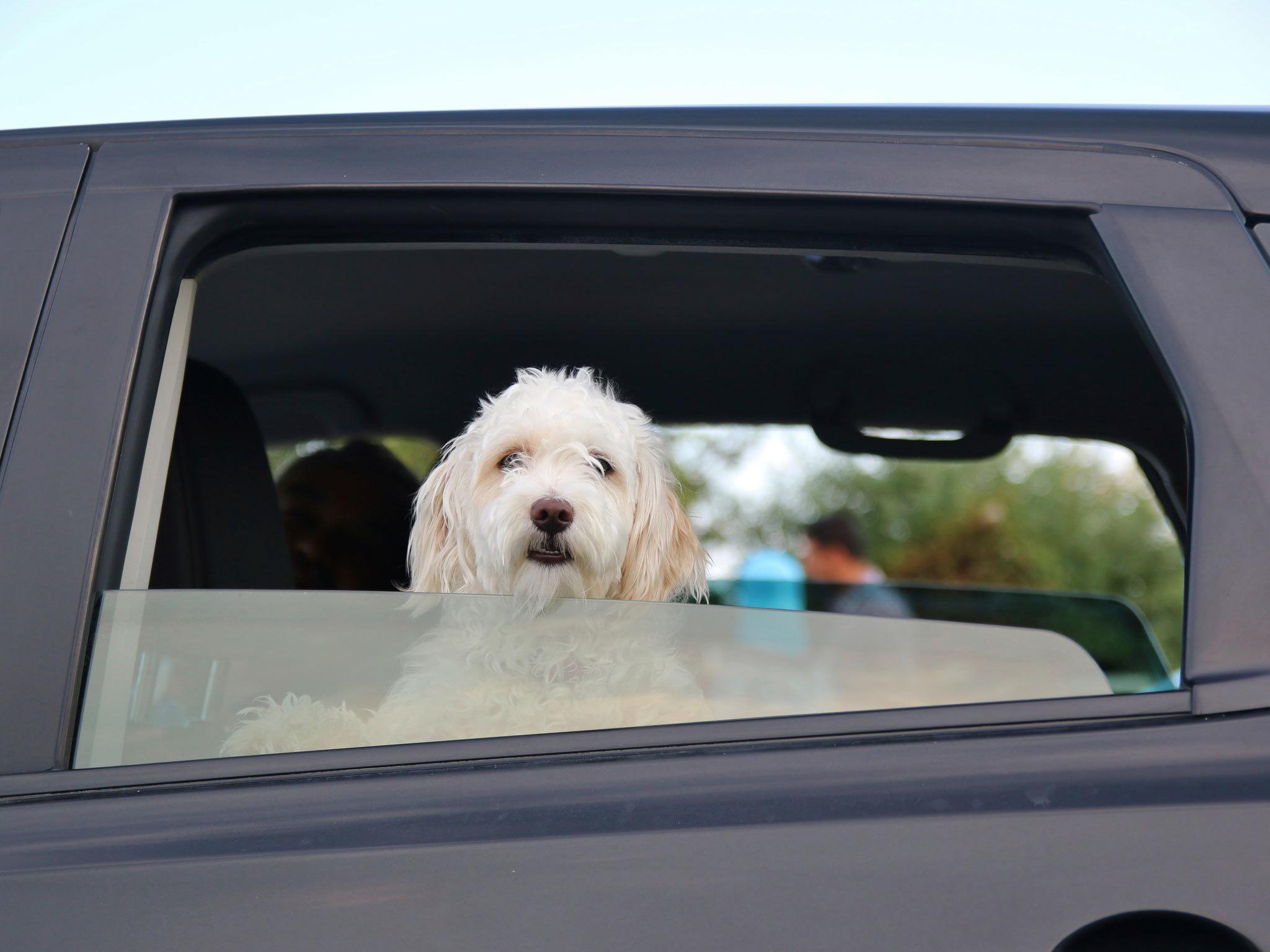 Pet Drive
