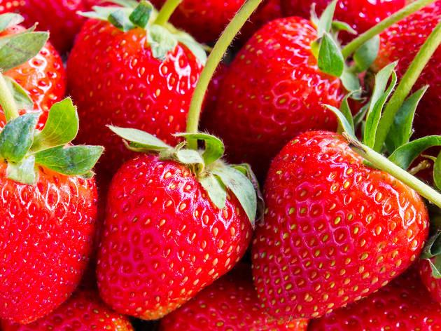 Ellsworth Hill Orchard & Berry Farm