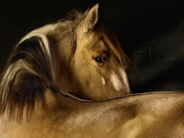 Animalista. Representación, violencias y respuestas