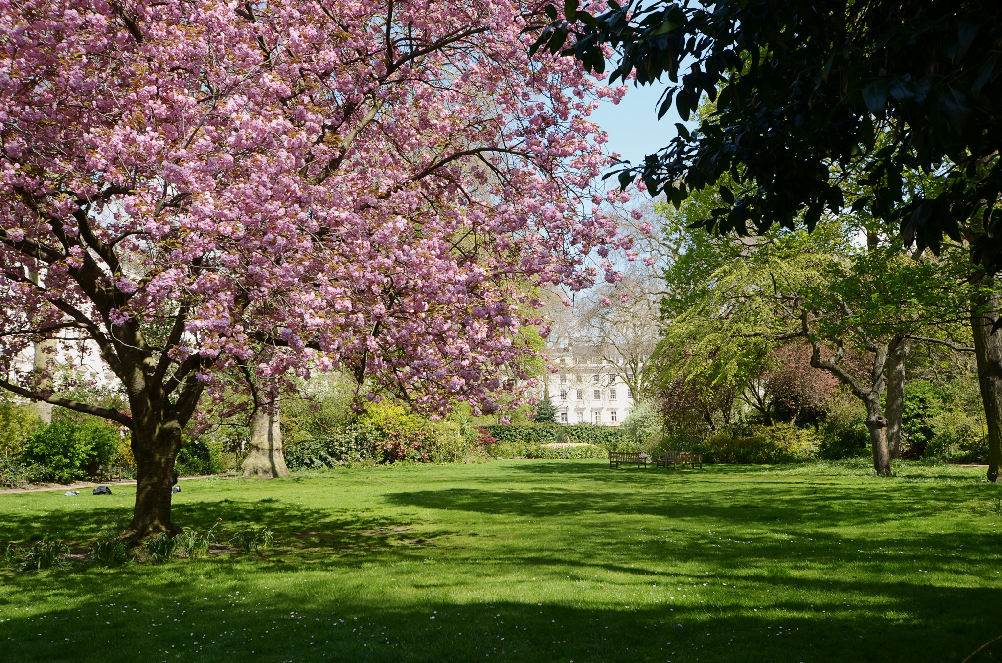Win a VIP garden experience for two with Open Garden Squares Weekend
